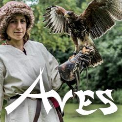 Falknerei Aves